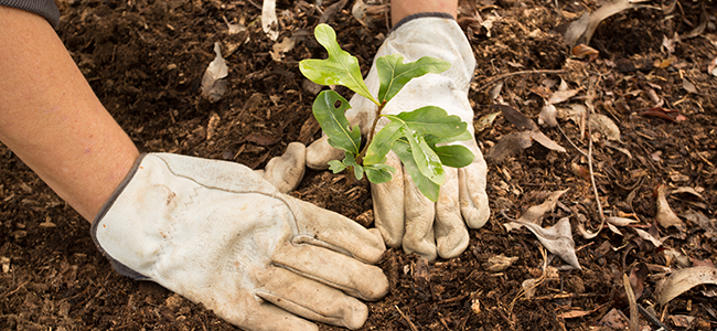 Plant a tree, a garden, or flowers